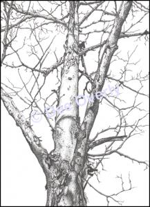 Tree Study #2