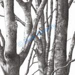 Tree Study #5